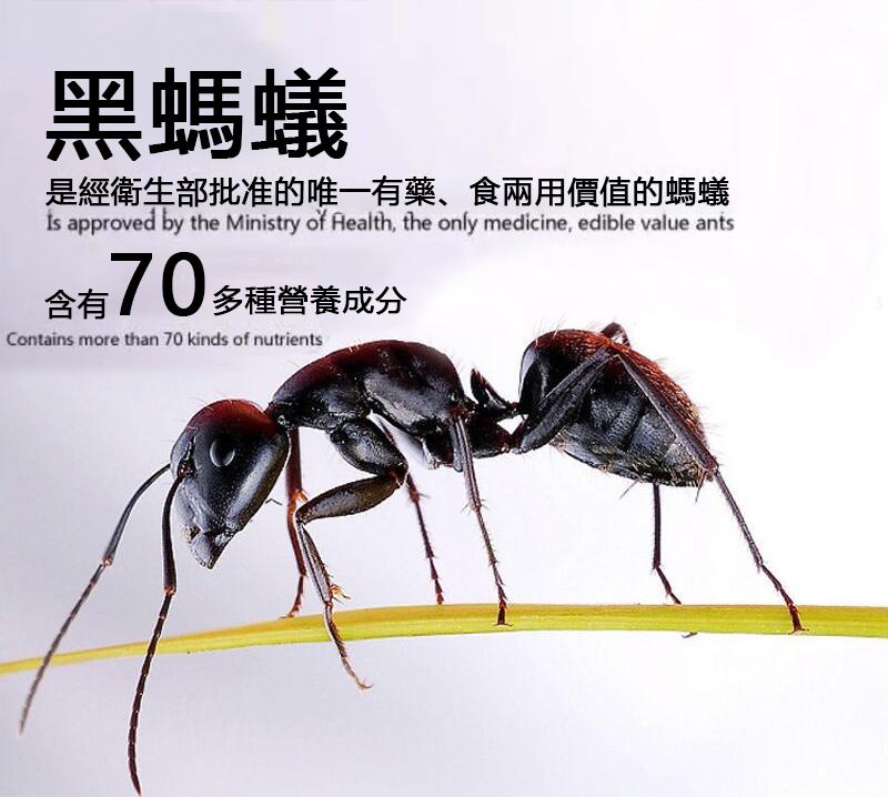 「德國黑螞蟻」生精片,香港進口24片盒中老年服用保養